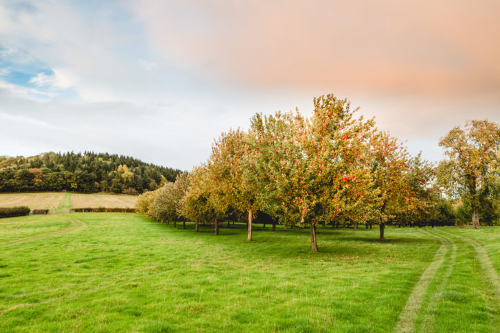 Picturesque Orchards at Gattertop Farm, Herefordshire